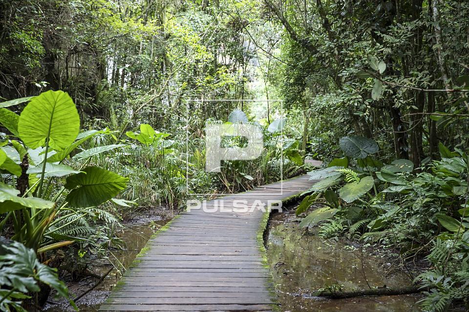Bosque Zaninelli - abriga a UNILIVRE - Universidade Livre do Meio Ambiente - bairro Pilarzinho