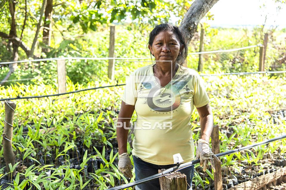 Indígena da etnia Taurepang trabalhando na plantação de mudas da palmeira açaí - Comunidade Mangueira - T