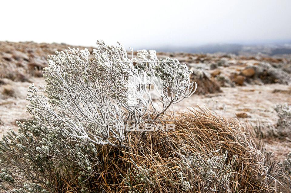 Vegetação coberta por neve no Morro das Antenas - também conhecido por Morro das Torres