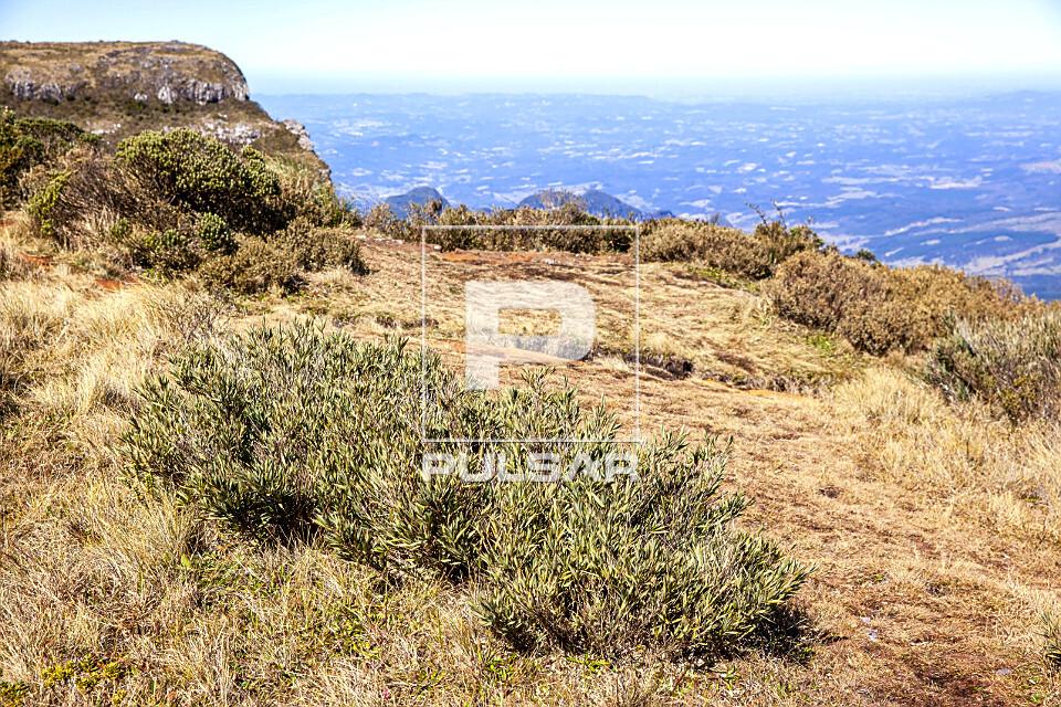 Vegetação no Morro da Igreja - Parque Nacional Sao Joaquim