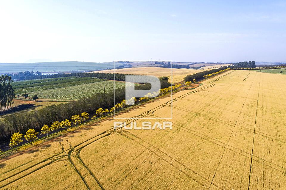 Vista de drone de plantação de trigo e ipês floridos na margem da estrada Antonio Vicentini