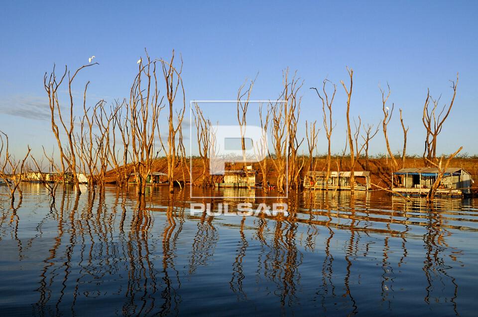 Com o nível de água mais baixo dos últimos 45 anos árvores que estavam submersas reaparecem no lago da Usi