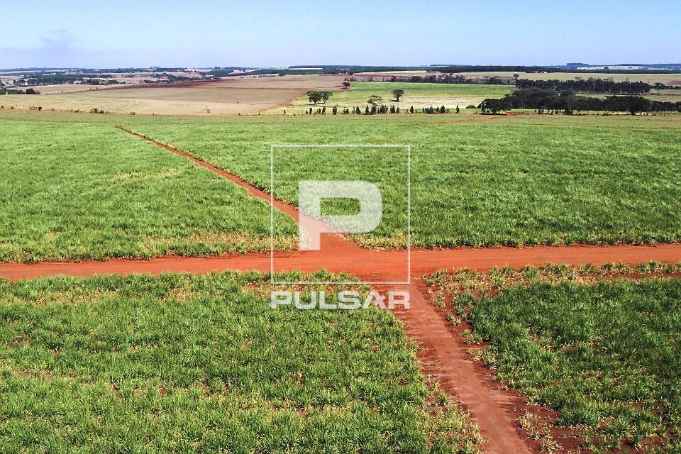 Vista de drone de plantação de cana-de-açúcar