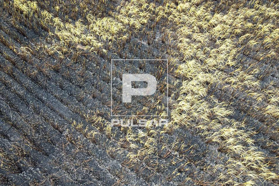 Vista de drone de plantação de cana-de-açúcar atingida por incêndio