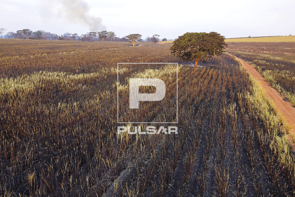 Vista de drone de canavial atingido pelo fogo