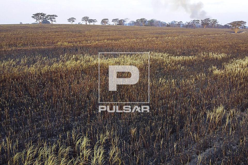 Vista de drone de plantio de cana-de-açúcar atingida pelo fogo