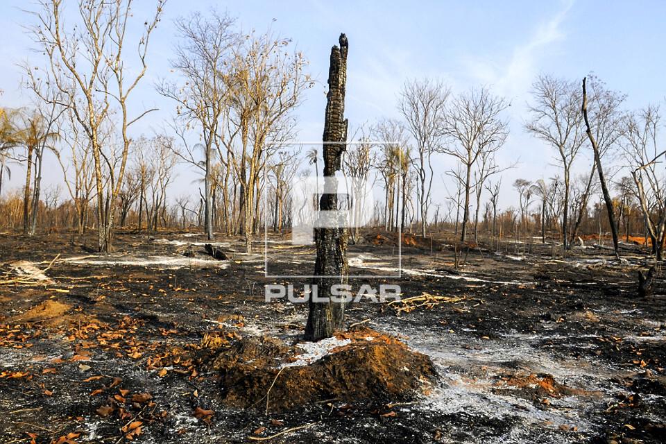 Área queimada por incêndio