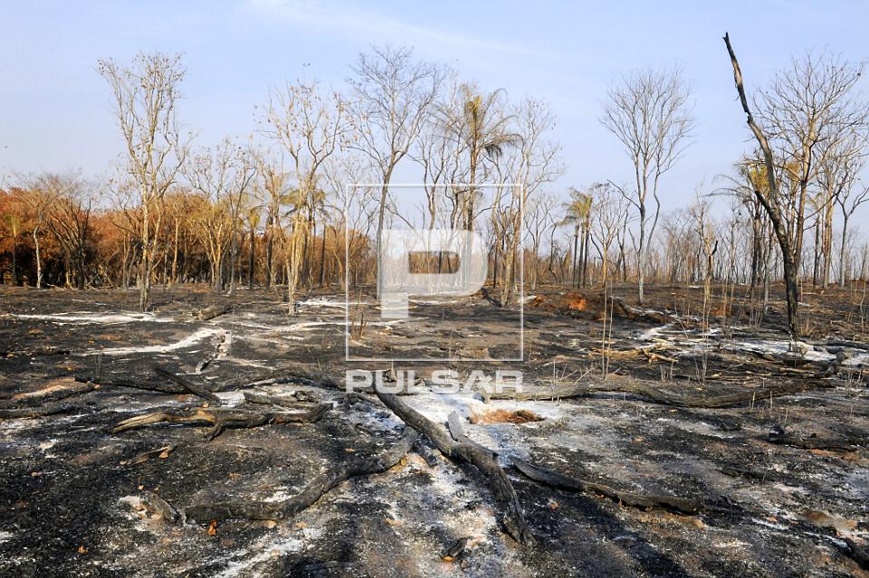 Cinzas e troncos queimados caídos em área atingida por incêndio