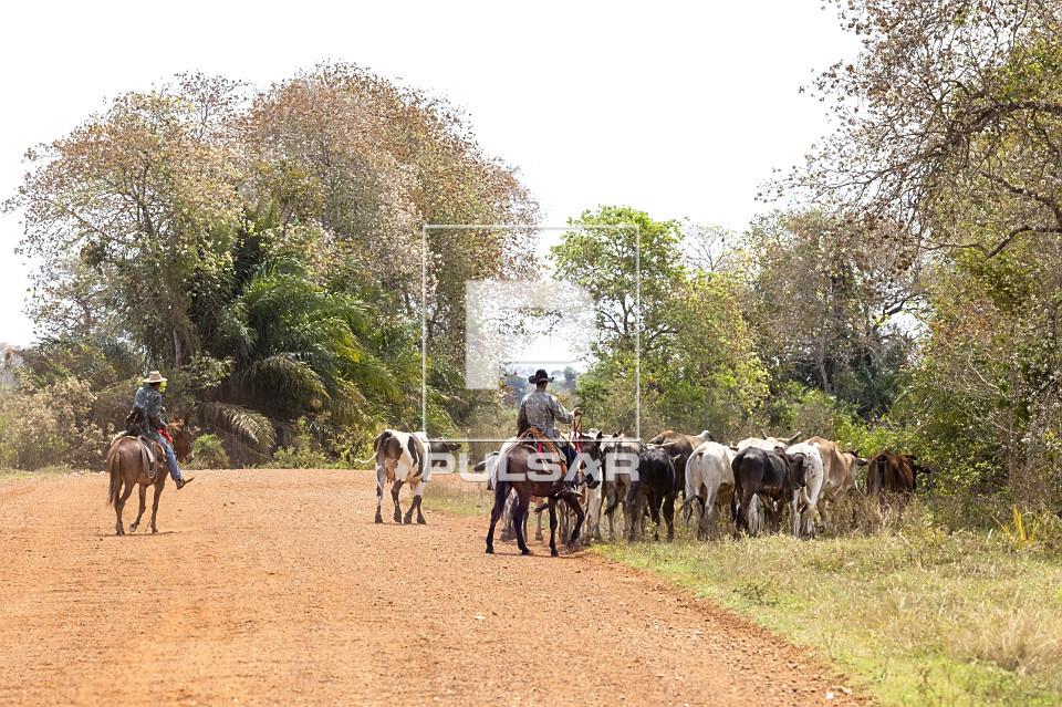 Peões conduzindo gado por estrada de terra no Pantanal Sul