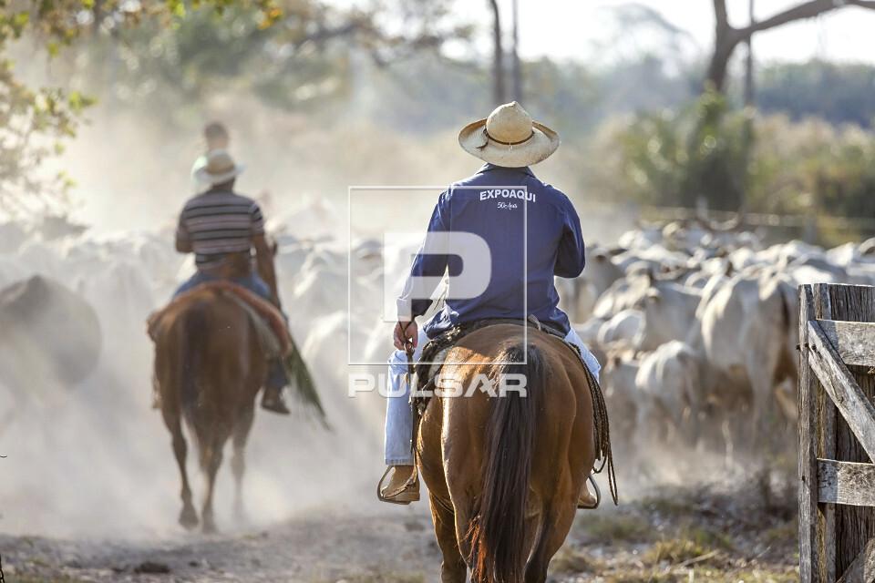 Peões tocando o gado na entrada da fazenda no Pantanal Sul