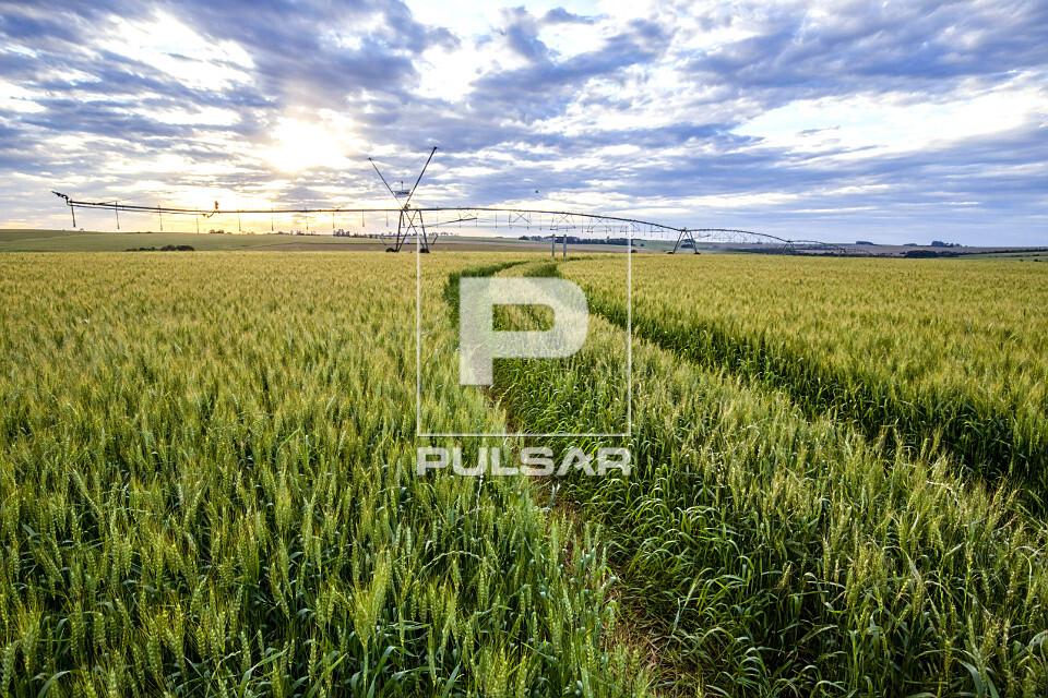 Pivô central para irrigação de plantação de trigo