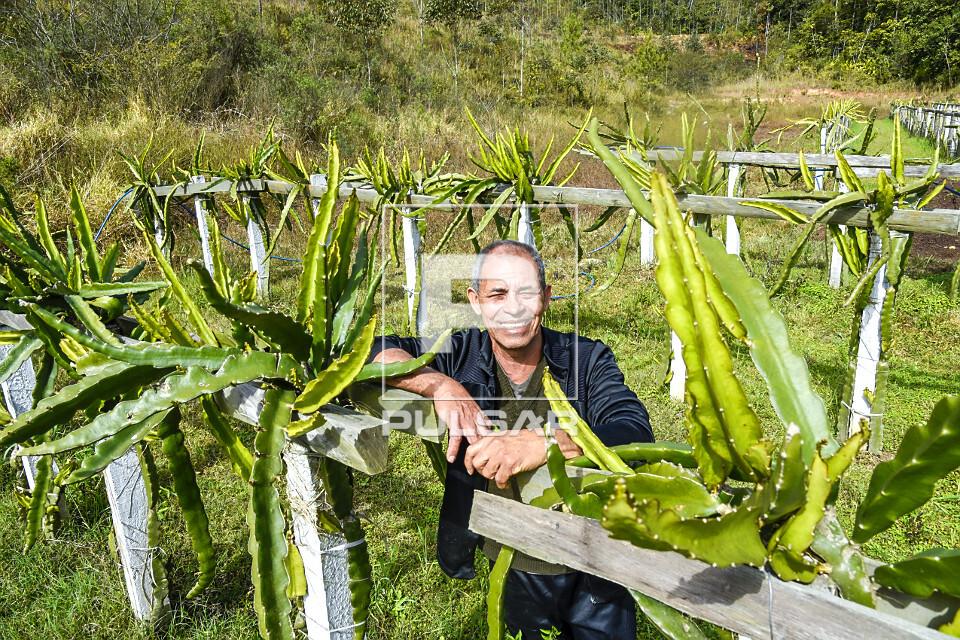 Agricultor posando em plantação de pitaia - também denominada fruta-do-dragão