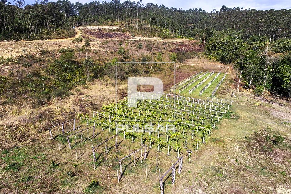 Vista de drone de plantação de pitaia em pequena propriedade rural