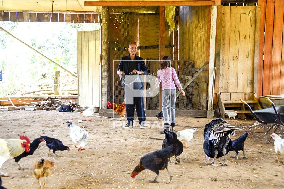 Sitiante e sua neta alimentando galinhas em galinheiro