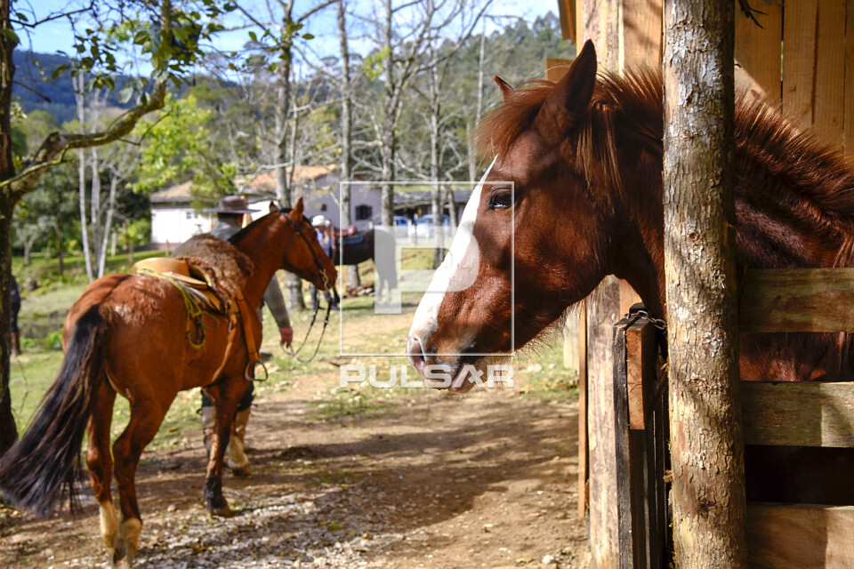 Cavalos em sítio