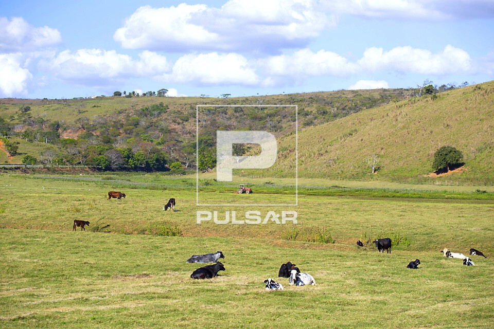 Vista de cima de gado bovino do pasto