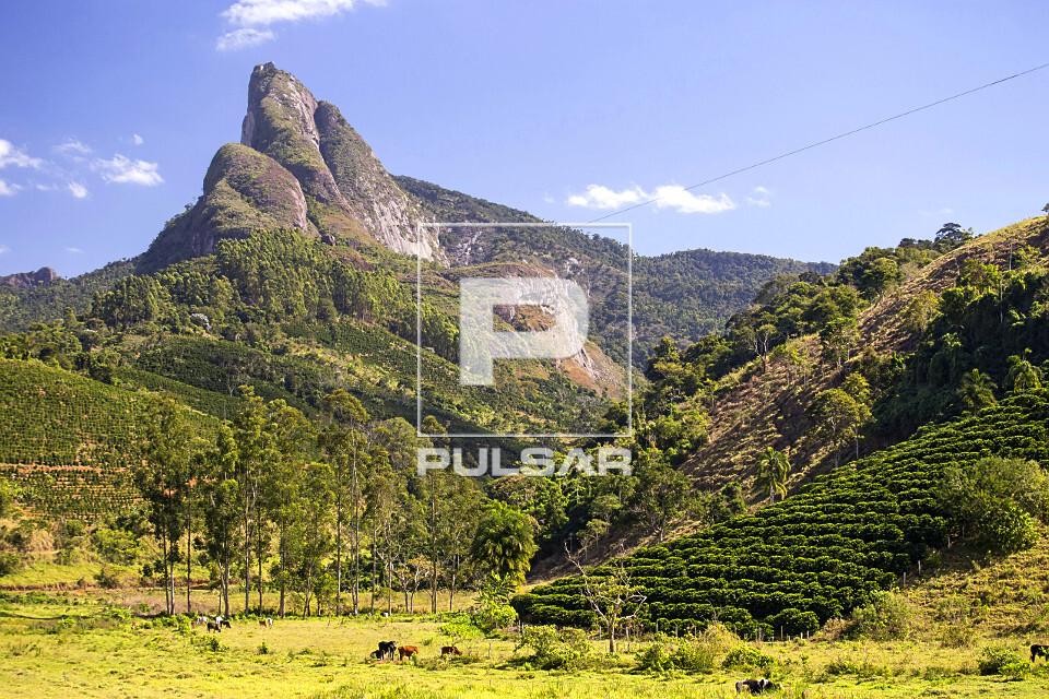 Gado no pasto e plantação de café de pequena propriedade rural com Pico dos Pontões ao fundo - faz parte d