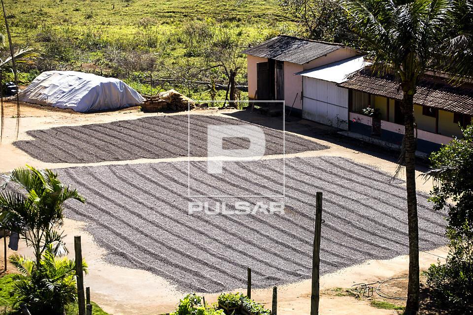 Vista de cima de secagem ao sol de grãos de café em pequena propriedade rural