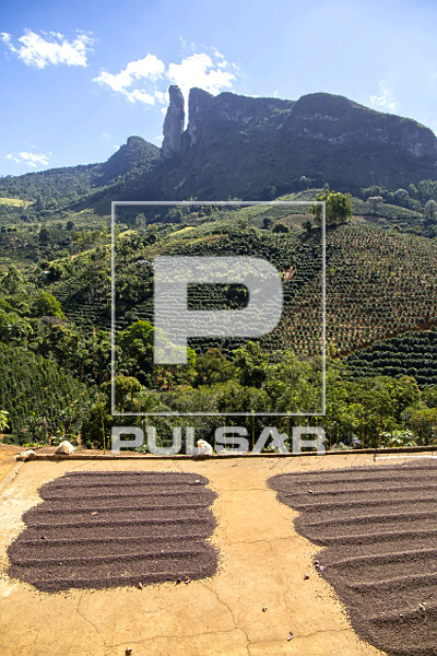 Secagem ao sol de grãos de café e cafezal ao fundo com Pico dos Pontões - faz parte do Monumento Natural Es