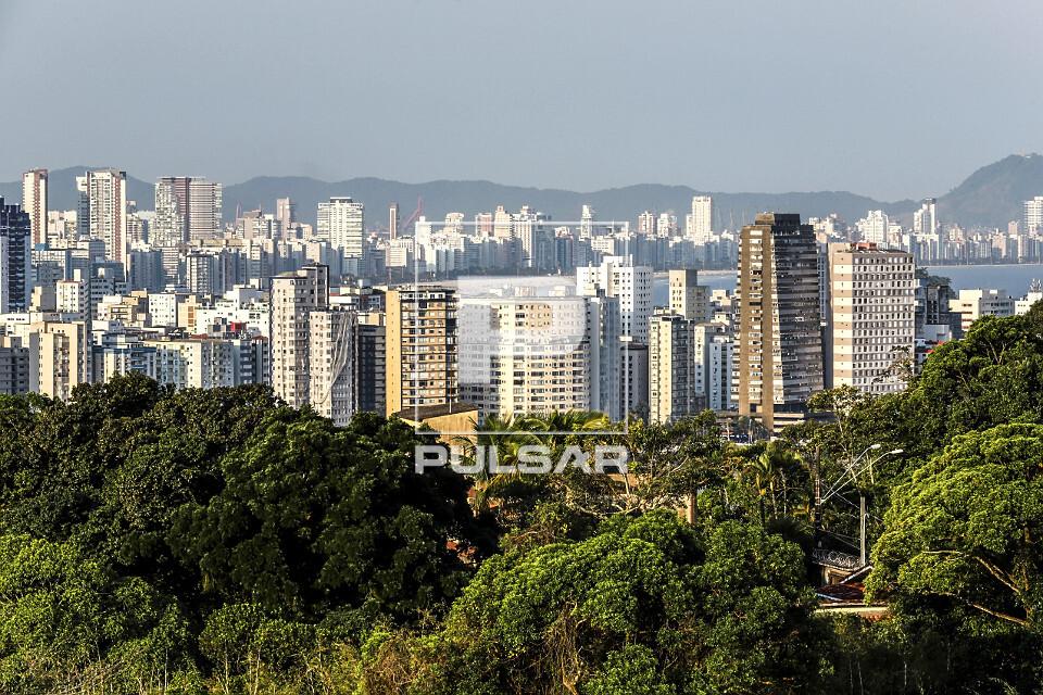 Vegetação no primeiro plano e edifícios - ao fundo cidade de Santos
