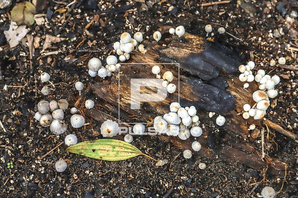 Cogumelos crescendo sobre tronco e folhas em decomposição