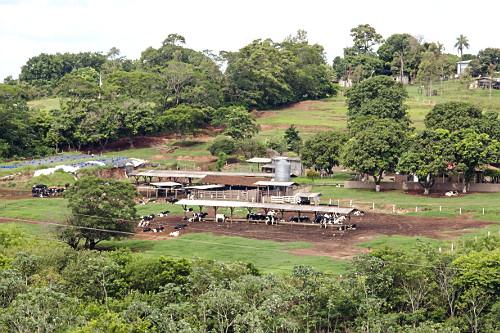 Criação de gado em propriedade rural
