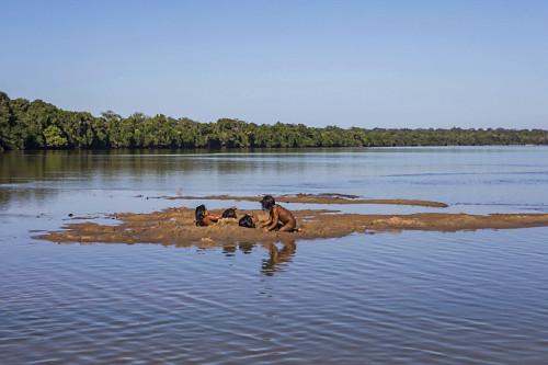 Meninas indígenas da Aldeia Afukuri e etnia Kuikuro brincam em banco de areia do rio Culuene - Parque Indíge