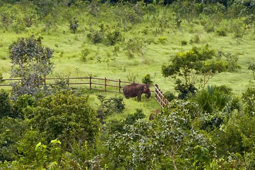 Vista de cima de elefante no Santuário de Elefantes Brasil