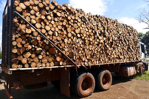 Caminhão carregado com toras de eucaliptos