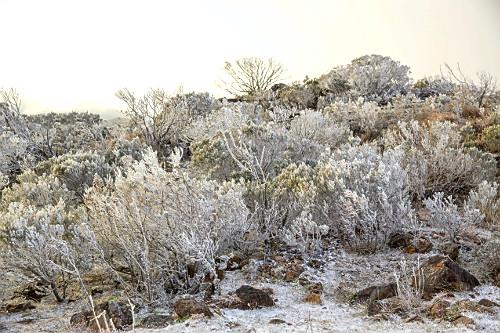 Vegetação coberta por gelo após geada no Morro das Antenas - também conhecido por Morro das Torres