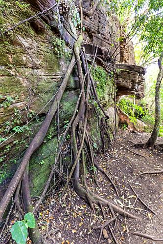 Raízes de árvores descendo pela parece de rocha