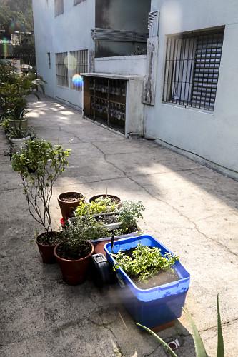 Vasos com ervas aromáticas e hortaliças em edifício residencial - bairro Perdizes