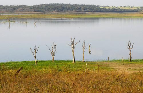 Nível de água mais baixo dos últimos 45 anos árvores que estavam submersas reaparecem no lago da Usina Hid