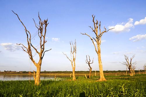 Árvores reaparecem no lago da Usina Hidrelétrica de Marimbondo com nível de água mais baixo dos últimos 4