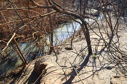 Vegetação queimada atingida por incêndio em área de proteção permanente de nascente