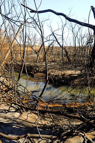 Vegetação atingida por incêndio em área de proteção permanente de nascente