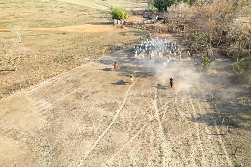 Vista de drone de peões boiadeiros tocando o gado para a entrada na fazenda no Pantanal Sul