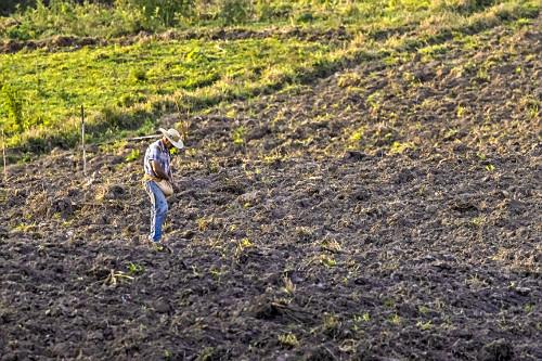 Agricultor semeando milho em terreno íngrime