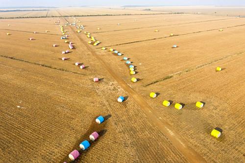 Vista de drone de fardos de algodão após colheita prontos para serem transportados para beneficiamento - cot