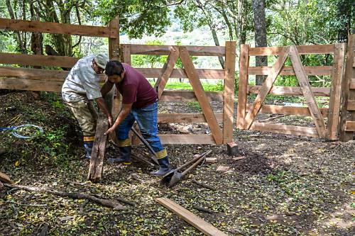 Homens construindo porteira de madeira em propriedade rural