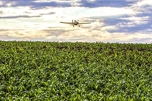 Avião agrícola aplicando ureia granulada sobre plantação de milho