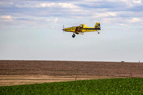 Milharal sendo adubado com ureia aplicada com avião agrícola - mecanização