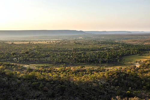 Vista de drone das veredas e Serra Geral ao fundo - APA Área de proteção Ambiental da Serra Geral de Goiás