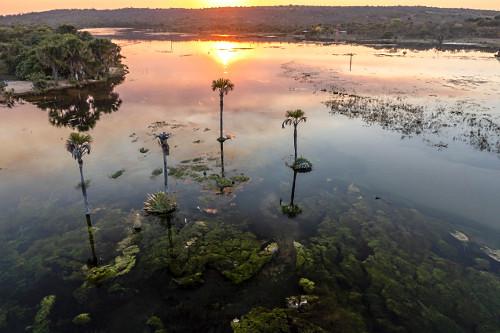 Vista de drone das veredas do Rio São Domingos ao entardecer - APA Área de Proteção Ambiental da Serra Ger