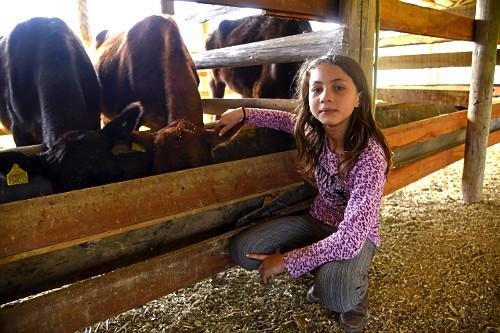 Menina acaricia vaca em comedouro