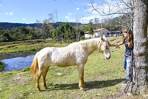 Menina fazendo carinho em cavalo