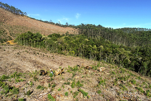 Vista de drone de exploração de madeira usada para abastecer caldeira em indústria de papel - Serra da Mant