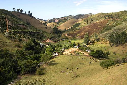 Vista de cima de pequena propriedade rural com cafezal e criação de gado