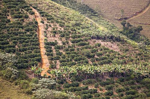 Plantação de café e bananas em encosta de pequena propriedade rural