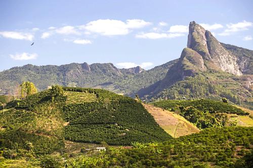 Vista de drone de cafezal com Pico dos Pontões no distrito Conceição do Muqui à direita - faz parte do Mon